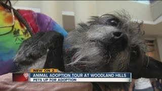 ARF tour highlights sheltered dog needs in Tulsa