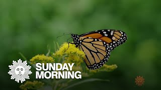 Nature: Butterflies in the summer sun