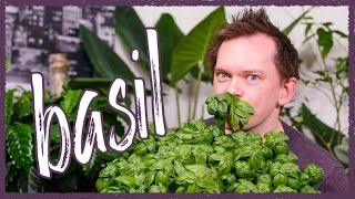 Grow Basil Indoors - Seed To Harvest!