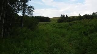 Осиновая роща к югу от Карабаса