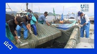 2017年#18イワシ漁で支える瀬戸内の島の暮らし|海と日本PROJECTinやまぐち