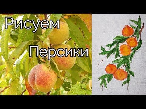 Как рисовать урок Персики How to draw Peaches tutorial 복숭아 나무 그림 그리기