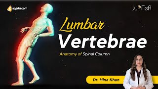 Lumbar Vertebrae (L1-L5) Spine Bone Anatomy Lecture for First Year Medical Students