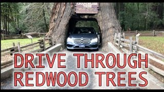 Drive Through Giant Redwood Trees in California