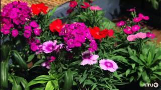 Edible winter flowers  Bastrop Gardens  Central Texas Gardener