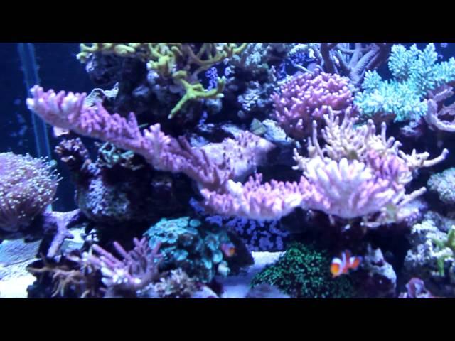 Large Reef Tank System