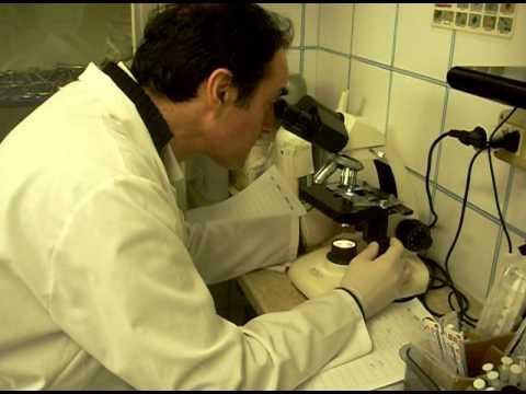 Ciclo di un parassita malarico