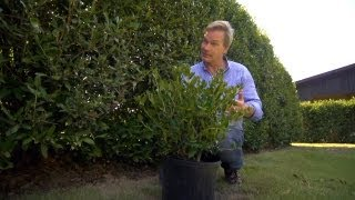 How to Grow Hedge Screens   At Home With P. Allen Smith