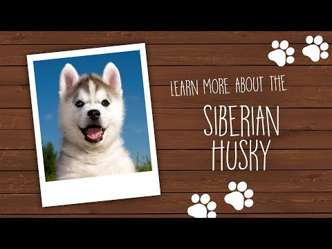 Dog Breed Video Gallery | Pet City Pet Shops | Colorado