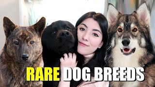 10 RARE Dog Breeds You've (probably) Never Heard Of