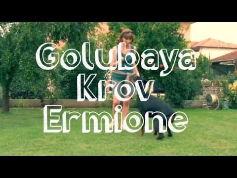 Preview video GOLUBAYA KROV ERMIONE