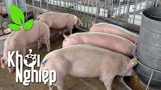 Giữ vững niềm tin - duy trì ý chí: Chăn nuôi lợn, ắt thành công - Khởi nghiệp 419   VTC16