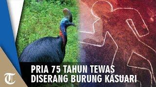 Berniat Beri Makan, Pria 75 Tahun Tewas Diserang Burung Kasuari Peliharaanya