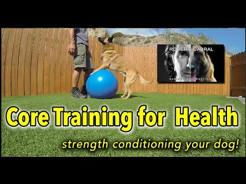 Core Training For Your Dog Using A Yoga Ball - Dog Training, Health & Fitness