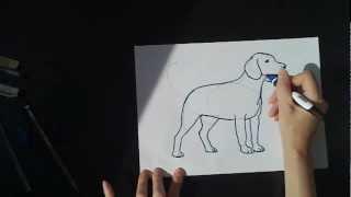 Смотреть онлайн Как поэтапно нарисовать собаку