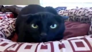 Подборка смешного видео котов