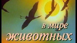 В мире животных с Николаем Дроздовым. Выпуск 53 2018
