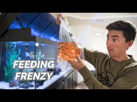WHAT HAPPENED TO OUR FISH?? ( Feeding )