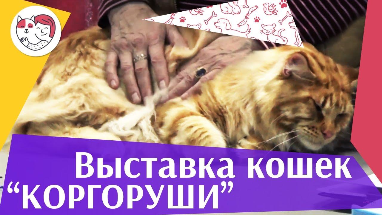 коргоруши клуб москва