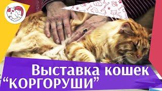 Международная выставка кошек. Клуб «Коргоруши». World Cat Federation