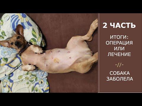 Обнаружили у собаки шишку на животе | Итоги