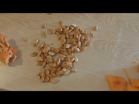 Молотые с кожурой семечки тыквы и кабачков