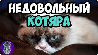 НЕДОВОЛЬНЫЙ КОТЯРА   Ананас TV   # 41