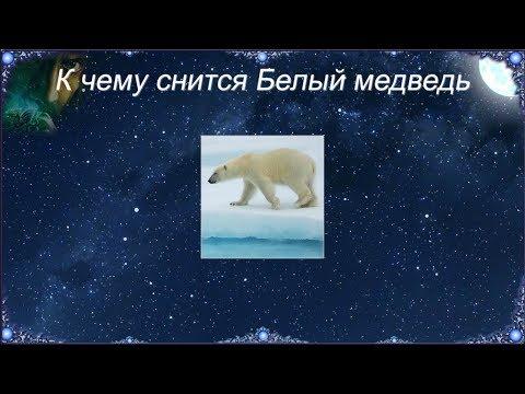 К чему снится Белый медведь (Сонник)