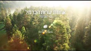 """סרטון יערות הכרמל (יח""""ץ ישרוטל)"""