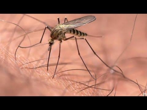 A paraziták elleni legjobb gyógymódok