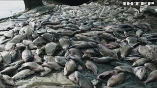 На Запоріжжі браконьєри масово винищували рибу