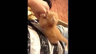 Антошка- котик