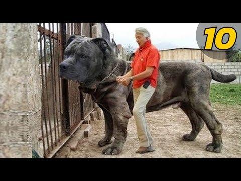 วิธีการหลายหนอนออกมาจากลูกสุนัขหลังจากยา