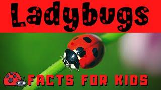 Ladybug Facts For Kids | Bug Or Beetle ???