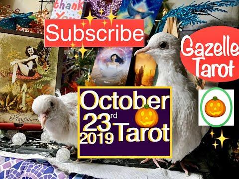 October 23 2019 Daily Tarot Reading 🎃Playfulness & Fun🦉#tarot #tarotreading #tarotreader