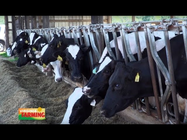 Virginia Farming: Dairy Industry Overview