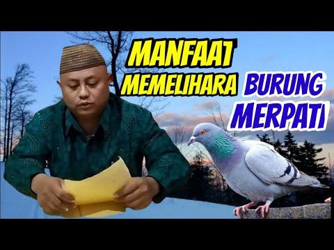 Manfaat memelihara burung merpati