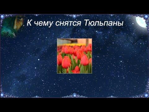 К чему снятся Тюльпаны (Сонник)