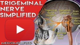 Trigeminal Nerve Anatomy - Cranial Nerve 5 Course and Distribution