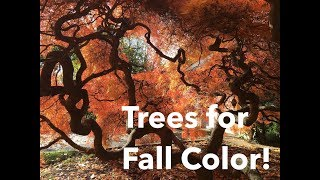 🍁 ~ Trees For GREAT Fall Color ~ 🍁