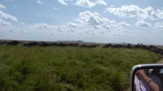 preview picture of video 'Wildebeest Migration across the Serengeti, Tanzania, Africa May '13'