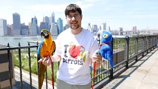 Raising Hope - A Toy Parrot's Travels Around NYC for Conservation