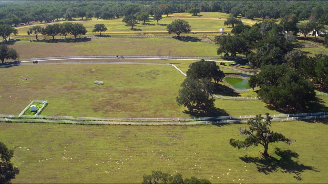 Tour Awe Inspiring Ocala Horse Farms Visit Florida