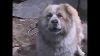 Смотреть онлайн Как защитится от нападения собаки на людей