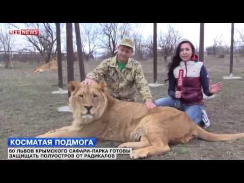 , title : 'Референдум в Крыму будут защищать боевые львы'