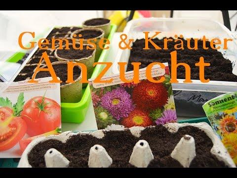 Gemüse und Kräuter - Anzucht im Haus. | WildpflanzenTV