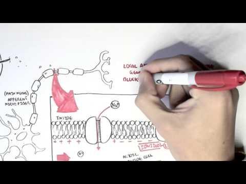 Papilloma virus uomo tempo di incubazione