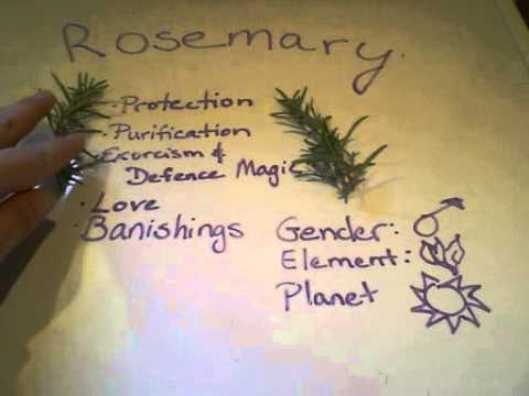 Video Magical Herbs: Rosemary