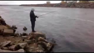 Рыбалка сосновый бор ленинградская область