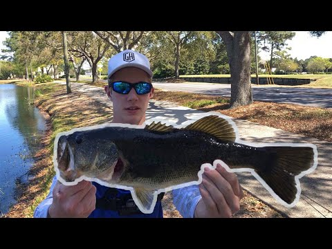 Fishing Everywhere In Florida... (Giants)